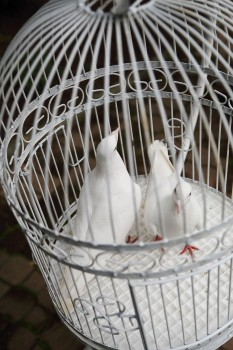 Doves in ornate cage
