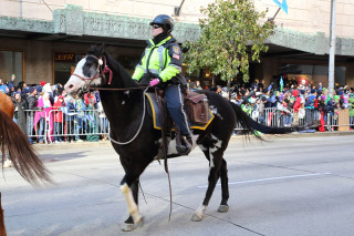 Mounted Police - Seattle Seahawks Super Bowl Victory Parade in Seattle, WA - February 2014