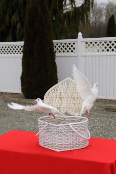 Dove release from heart basket - Sound Dove Company